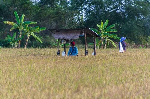 parc national sam roi yot - thailande 25