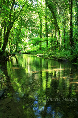 Tintern Stream (Ken Meegan) Tags: tinternstream tinternwoods saltmills cowexford ireland wexford stream wood 1762017