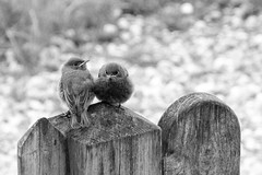 Bird set (Littleland) Tags: xt2 bird natur vogel fumi