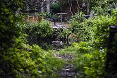 Peaceful Goose (Jonathan Goddard1) Tags: pentax k1 dfa 150450mm bird canada goose reflection framing water canal plants leaves light