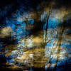 Trees In Water 117 (noahbw) Tags: d5000 dof nikon oriolegrove skokieriver abstract blur branches depthoffield distortion forest landscape mud natural noahbw reflection ripples river shadow silhouette square sunlight trees water woods
