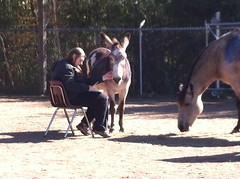Equine-Therapy (38)