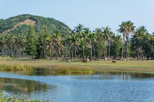 parc national sam roi yot - thailande 92