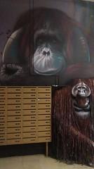 IMAG3833 (sebsity) Tags: streetart graffiti art rehab2 paris