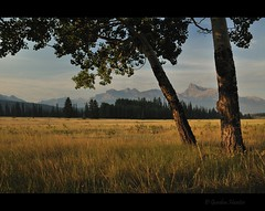 it's all so simple (Gordon Hunter) Tags: trees two 2 trunk grass sun early light summer field leaves shade shadows landscape wilderness forest nature rockies rocky mountains ab alberta kootenay plains abraham lake canada gordon hunter nikon d5000 august 2014