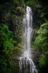 Wailua Falls (PrevailingConditions) Tags: hawaii maui wailua falls wailuafalls waterfall lush forest pool