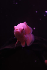 fishy (g(e) n o m o) Tags: aquarium acuario fish nature sea animal