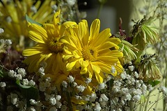 A Mood Changer (swong95765) Tags: flowers bouquet pretty beautiful lovely fading