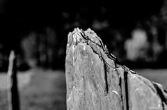 schiste ardoise (Patrice Dx) Tags: roche ardoise schiste minéral