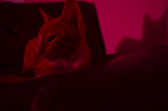 Cat. (sadday_ksg) Tags: neón cat animal gato