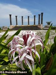 Amphitheater of Tesoro Beach Hotel, Costa del Sol, El Salvador (ssspnnn) Tags: amphiteather anfiteatro hoteltesorobeach tesorobeachhotel costadelsol elsalvador columnas nunes spnunes spereiranunes samsung