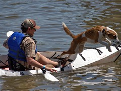 Dog Leaps Out (swong95765) Tags: kayak guy man water river dog canine animal pet jump leap