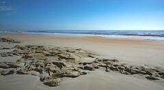 Atlantic Ocean at Washington Oaks Park (tfhammar) Tags: coquina beach staugustine palmcoast atlantic ocean seascape golden sand