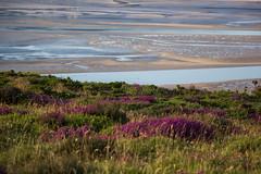 Heather and Morfa (beatraxa) Tags: coastalpath conwy wales coast heather mountain sandbank shore top topography view
