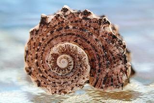 Spiral Seashell 🐚