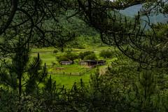 Cottage through the Pines, Shangri-La (gravelfeet) Tags: china yunnan travel outdoors zhongdian shangrila hiking exploring