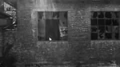 bianco e nero (Clay Bass) Tags: saluzzo backlight broken bw dxo glass pigeons rays wall