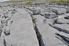 Desert of stone. (mcgrath.dominic) Tags: glints grikes limestone theburren coclare