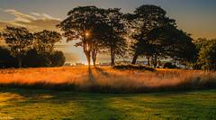 Les Cotils shadows (Ian Toms) Tags: grass locateguernsey goldenhour guernsey sunrise goldenglow guernseylife stpeterport sea sun summer visitguernsey cloudporn shadows golden lescotils sky guernseystyle skyporn trees landscape sunlight