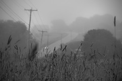 through the grasses, roadway, powerlines, fog, dusk, route 131 south, Saint George, Maine, Nikon D3300, mamiya sekkor 80mm f-2.8, 7.16.17 (steve aimone) Tags: landscape fog dusk grasses powerlines route131 saintgeorge maine midcoast headlights nikond3300 mamiyasekkor80mmf28 mamiyaprime primelens blackandwhite monochrome monochromatic roadway road