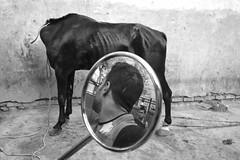 Horse head (Z_Abbas) Tags: horse abstract blackandwhite fuji delhi streetphoto mirror reflection death fear