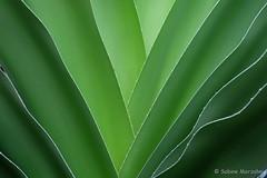 Green Fan (Sockenhummel) Tags: botanischergarten botanischergartenberlin palme fuji x30 fujifilm finepix fujix30 fan fächer blatt leaves grün