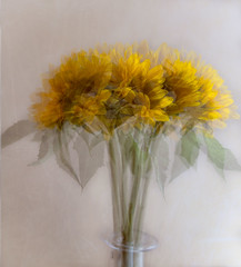 Sunflowers (judepics) Tags: multipleexposure stilllife flowers sunflowers