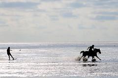 horsesurfing is the trend (Wackelaugen) Tags: horse surfing tidalflat tideland tideflat mudflat sahlenburg cuxhaven nordsee northsea germanocean sea ocean canon eos photo photography wackelaugen