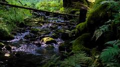 Silberbachtal (Jos Mecklenfeld) Tags: germany deutschland duitsland teutoburgerwald landscape landschap landschaft silberbach silberbachtal hornbadmeinberg forest wald bos rivier beek fluss bach river stream northrheinwestfalen hiking wandern wandelen sonynex3n selp1650