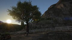 Cow (Brandon ProjectZ) Tags: gtav morning sunrise trees cow