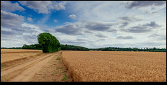 170624-2519-XM1.jpg (hopeless128) Tags: france sky eurotrip fields tree 2017 clouds nanteuilenvallée nouvelleaquitaine fr