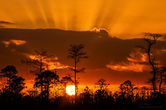 As The Sun Sets ... (ac4photos.) Tags: sunset landscape silhouette florida nature sunsetphotography landscapephotography naturephotography silhouettephotography nikon d300s ac4photos ac