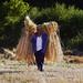 Che ne sai tu di un campo di grano n.1
