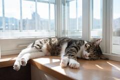 _DSC0617 (catfish.boogie) Tags: nikond750 japan tamronsp35mmf18divcusd hokkaido cat