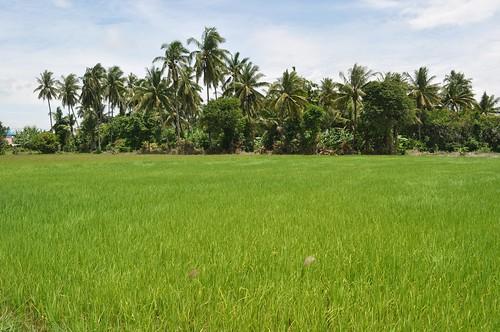 singburi - thailande 2