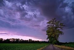 Storm is coming (andrea.dusk) Tags: sky tree landscaoe landscape colours field cloud clouds storm rain weather outdoor nikon d7100 tokina 1116mm summer