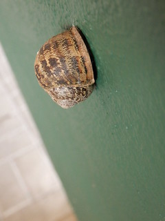 Hang on there snail!