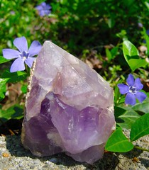 Amethyst Crystal and Periwinkle (Piedmont Fossil) Tags: rock mineral crystal quartz amethyst periwinkle flower purple