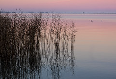 Reeds on the lake at Dawn (markbev99) Tags: lake colors colour reeds dawn sunrise reflections landscape water