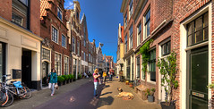 Dutch dog. (Alex-de-Haas) Tags: 1635mm d750 dutch hdr haarlem holland nederland nikkor nikon noordholland thenetherlands architecture architectuur binnenstad capital city citylife hoofdstad houses huizen innercity lente mensen people spring stad stadsleven straat straatfotografie street streetphotography sunny traffic urban verkeer zonnig