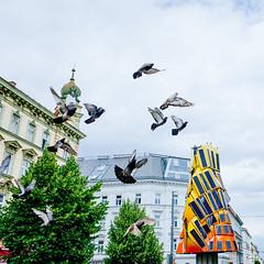 Startled (The Hobbit Hole) Tags: pigeons ricohgr urban vienna flight ricoh austria