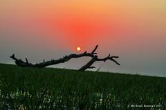 | THE SUN YOLK | (iam_aanwar) Tags: sun red yellow orange sunset field green tree nature naturephotography calm calmness still tour travel travelphotography evening eveningsky