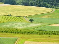 Summer in the Countryside (verweile.doch) Tags: summer sommer countryside vogelsberg hessen germany deutschland felder fields trees landscape landschaft bäume getreide verweiledoch