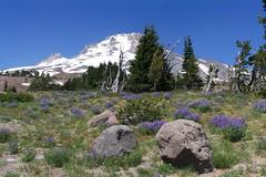 A hike on Mt Hood (SomeCallMeScott) Tags: mthood hike oregon nature mountain summer