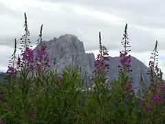 Sasso Lungo e Sasso Piatto (giorgio 12) Tags: dolomiti sassolungo sassopiatto montagne fiori