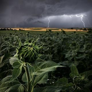 Stormflower (edited)