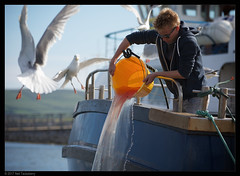 last of the scraps (Neil Tackaberry) Tags: fisherman scraps offal birds seagull gull food overboard county co kerry countykerry cokerry irish ireland boat water pour pouring dingle dinglepeninsula actionshot wildatlanticway