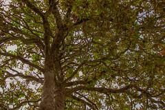 S.MasséMaisonduMajordome©TourismeHautLimousin-55 (tourisme_hautlimousin) Tags: jardin gîte vacances hautlimousin patrimoine location fleurs botanique tourolim