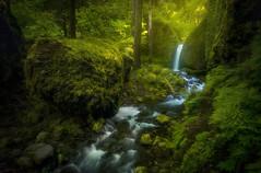 Green Planet (Sapna Reddy Photography) Tags: oregon columbiarivergorge waterfall water stream flow cascade green spring lush nature landscape ferns foliage greenery mossygrotto moss