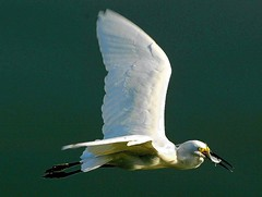 Peixes , na Lagoa (ricardoleoni) Tags: impostos decreto conservação tráfico natureza riodejaneiro
